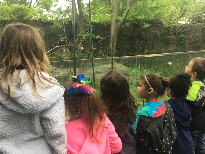 Looking at the Bald Eagles!